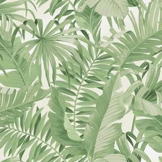 Lucie Annabel Palma Tropical Wallpaper Green - Wallpaper from I Love Wallpaper UK Office Wallpaper, Wallpaper Uk, Kitchen Wallpaper, Glitter Wallpaper, Trendy Wallpaper, Wallpaper Designs, Latest Wallpaper, Silver Wallpaper, Sage Green Wallpaper