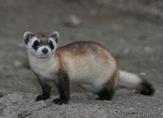 Background on Endangered Species