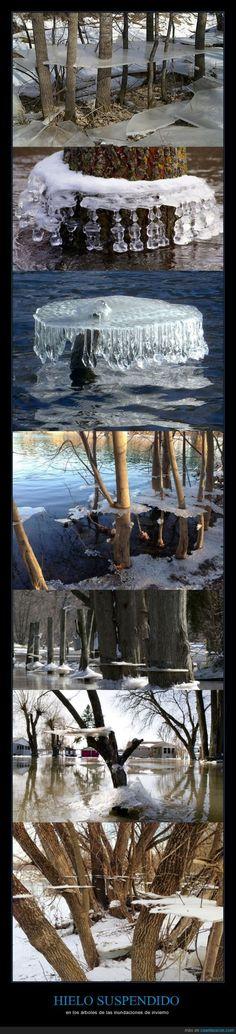 HIELO SUSPENDIDO - en los árboles de las inundaciones de invierno
