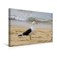 Kalifornienmöwe (USA) (Premium Foto-Leinwand  45x30 cm)