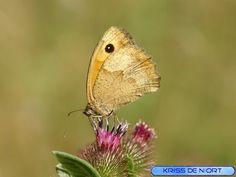 http://faaxaal.forumgratuit.ca/t2561-papillons-de-france-photos-de-lepidopteres-non-identifies-papillons-a-identifier