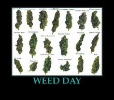 Funny marijuana memes and weed pictures - political humor, A collection of funny memes, cartoons, and quotes about marijuana and the debate over its legalization. Description from darkbrownhairs.org. I searched for this on bing.com/images