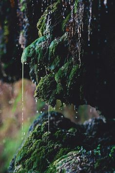 wild, moss, green, outdoors, rain, weather, nature