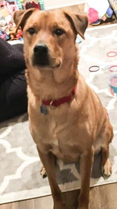 Lost Dog - Male - Cuyahoga Falls, OH, USA 44223  Last Seen: Archwood Place and Silverlake Ave Area