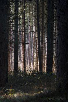 """Awakening"" the woods at Schiermonnikoog, the Netherlands"