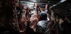RS Notícias: Avanço da Carne Fraca
