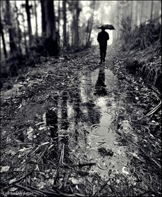Rainy forest walk - delightful!