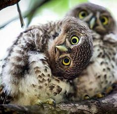 Pin By JA Beeche On OWLS