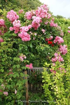 Is it because it is mostly hidden from view, like this rose-covered-arbor entrance, bench inside?