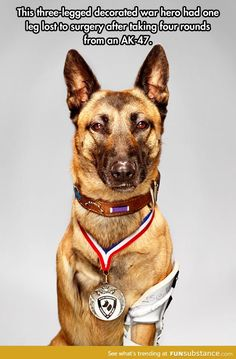 This war dog hero deserves as much respect as any other soldier