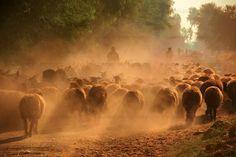 shepherds from Baluchistan,Pakistan | Flickr - Photo Sharing!