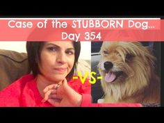Case of the Stubborn Dog and School Supply Explosion! | Day 348 | Findin...