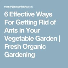 6 Effective Ways For Getting Rid of Ants in Your Vegetable Garden | Fresh Organic Gardening