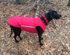 Dog coat for Great Danes - dog jacket - Custom made coat - Softshell outer with fleece lining - dog clothes - Made to order Dog Winter Coat, Black Winter Coat, Great Dane Dogs, Dog Jacket, Dog Wear, Softshell, Dog Coats, Large Dogs, Dog Breeds