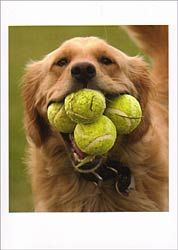 Aww!  Reminds me of a friends dog, Luster, who was OBSESSED with tennis balls and did the same thing!