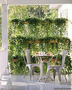plants = privacy