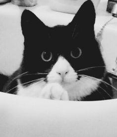 I bloody love my cat