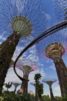 Singapore - Supertrees are tree-like structures that dominate the Gardens landscape with heights that range between 25 and 50 metres. They are vertical gardens that perform a multitude of functions, which include planting, shading and working as environmental engines for the gardens.