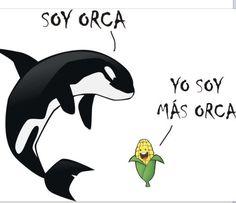 Correct spelling corn in Spanish Is maz-orca  of corn They changed the maz for mas-more I am more orca Yo soy  más-orca de maíz   Entienden please??? Ha, ha Is cute spanish lesson número uno ha ha