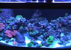 Get your corals to pop with this simple modification to your light. Check out how it was achieved!