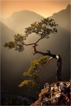The lone pine Photography @ Designzzz