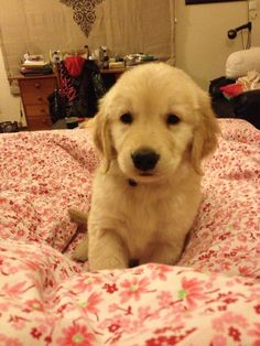 It is sooooo compfy here ❤️ Golden Retrievers, Girls Best Friend, Animals And Pets, Cute Puppies, Dog Lovers, How To Memorize Things, Dogs, Life, Pets