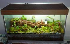 terrarium of carnivorous plants | ... aquarium - Terraria - Cultivation & Equipment - Carnivorous Plants UK