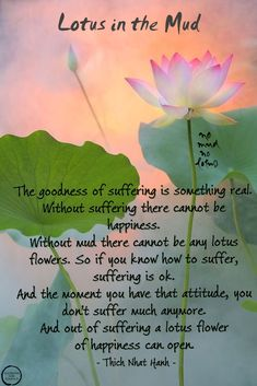Lotus Quote, Lotus Flower Quote, Lotus Flower Meaning, Blue Lotus Flower, Lotus Flowers, Flower Qoutes, Lotus Tattoo Meaning, The Better Man Project, Buddhist Quotes