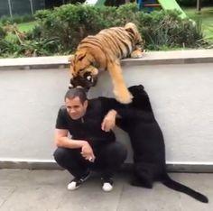 ¿Ocuparías su lugar ? #Animales #Mascotas