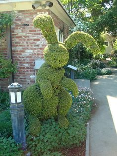 Bunny Topiary - This is a Big Boy!