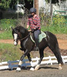 mr adorable R Blue Moon. Connemara Pony, Blue Moon, Dressage, Ponies, Riding Helmets, Ranch, Sports, Guest Ranch, Hs Sports
