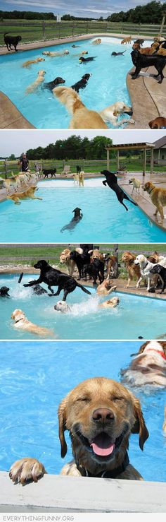 funny dog pool party, looks like Olly's San Diego day camp.