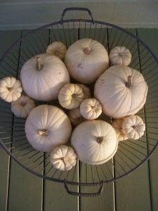 White pumpkins on my porch