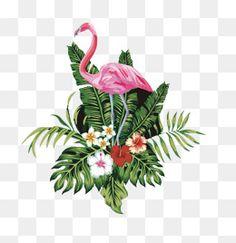 النحام الوردي