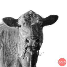 Reid Studios - Art by Vincent Reid - located in Howick Pencil Art, Art Studios, Cow, Wildlife, Gallery, Animals, Animales, Roof Rack, Animaux