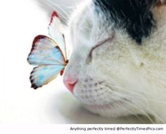 Our Beautiful World – This cat naps and a colorful butterfly lands on its nose. | Perfectly Timed Pics