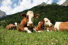 Na abbiamo già parlato, ma continuano ad arrivare conferme: è necessario ridurre il consumo di carne e prodotti caseari per ridurre le emissioni di gas ser