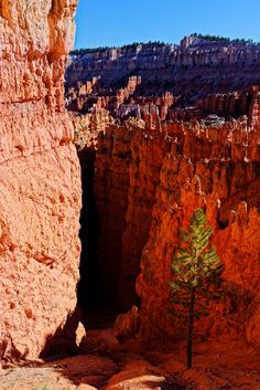 bryce national park - bryce national park Bryce National Park, National Parks, Grand Canyon, Nature, Travel, Naturaleza, Viajes, Destinations, Grand Canyon National Park
