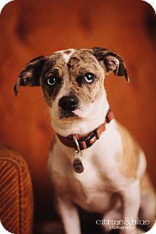 Portland, OR - Pug/Beagle Mix. Meet Romeo, a dog for adoption. http://www.adoptapet.com/pet/11884902-portland-oregon-pug-mix