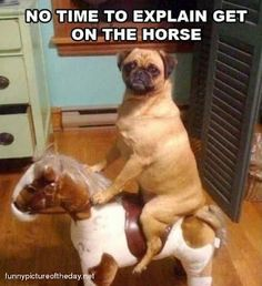 Oh my....this reminds me of my pug, Jo Jo!!!  LOL!  LOL!