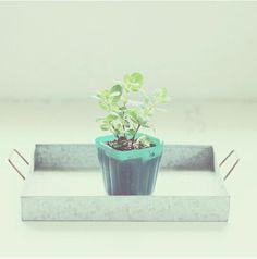 Mini Plant By @sesokojima