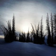 The golden orb faded into the greying sky while skeleton trees hovered over the mountain. Just like the air time stood still.  Oh the places you'll go on skis... #backcountryskiing #backcountry #mountains #snow #wolfcreekpass