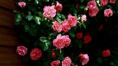 download flower wallpaper in hd