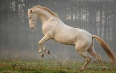 8c6758e07e87d3d148662006f1bed664_650x abrir la pag que dice upsocl.son 21 caballos hermosos