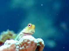 「カエルウオ」の画像検索結果