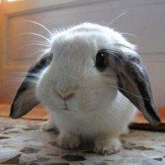 I cute! Baby bunny.