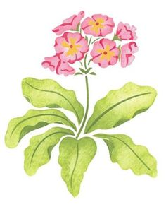 Primrose Flower Wall Stencil