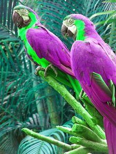 Purple Parrots. Gorgeous.