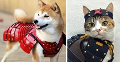 A Japanese company called Samurai Age just created something the world desperately needed - samurai armor for cats and dogs. Pets are already like loyal samurais that go by our side and protect us (not sure about cats, tbh), so surely they deserve armor that would ignite their warrior spirits.