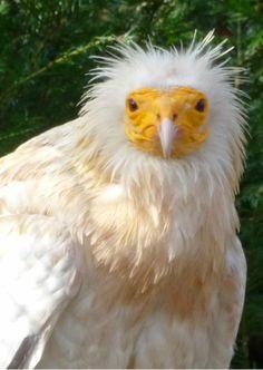 Grappige kuif vogel, funny bird. Kaartje2go - creagaat dieren